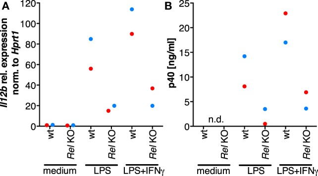 The role of Rel in the induction of Il12b expression. Murine Rel knockout BMDMs or wild-type BMDMs ( N = 2 each) were differentiated in vitro and stimulated with LPS or LPS and IFNγ for 24 h. Cells were used for RT-qPCR analysis of Il12b (A) , and Il-12p40 was measured in supernatants by ELISA (B) ; n.d., not detected.