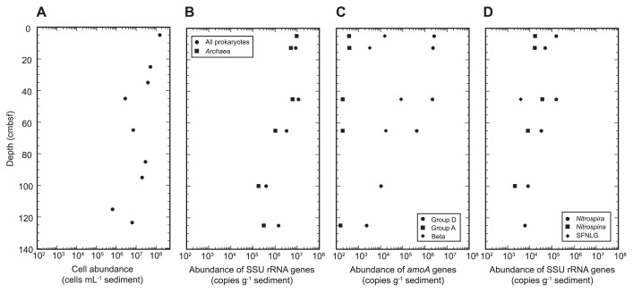 Profiles of direct cell counts (A) and copy numbers of whole prokaryotic and archaeal SSU rRNA genes (B), amoA genes (C), and SSU rRNA genes of nitrite oxidizers (D) in sediment core #AB11 taken from the Challenger Deep, the Mariana Trench. Groups D and A and Beta (C) indicate the archaeal amoA of groups D and A and betaproteobacterial amoA , respectively. SFNLG (D) indicates the potential nitrite-oxidizing Subseafloor Nitrospina -Like Group.