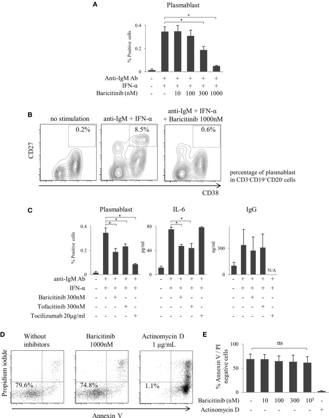 Baricitinib inhibits B cell differentiation. Human B cells were purified and cultured for 5 days in the presence of anti-human IgM Ab F(ab′)2 fragments and under interferon (IFN)-α stimulation. Plasmablast (CD3 − CD19 + CD20 − CD27 hi CD38 hi ) differentiation was assessed by flow cytometry, and IgG Ab titers and interleukin (IL)-6 concentrations in culture supernatants were measured by ELISA Cytometric Bead Array. (A) Percentage of plasmablasts. (B) Representative flow cytometry plots showing plasmablasts. (C) Percentage of plasmablast, IL-6, and IgG concentrations in the presence of baricitinib and other inhibitors. (D) Representative histogram data of annexin V/propidium iodide staining. (E) Rate of viable cells (annexin V neg /propidium iodide neg ). Data are mean ± SD of three different donors per group. * p