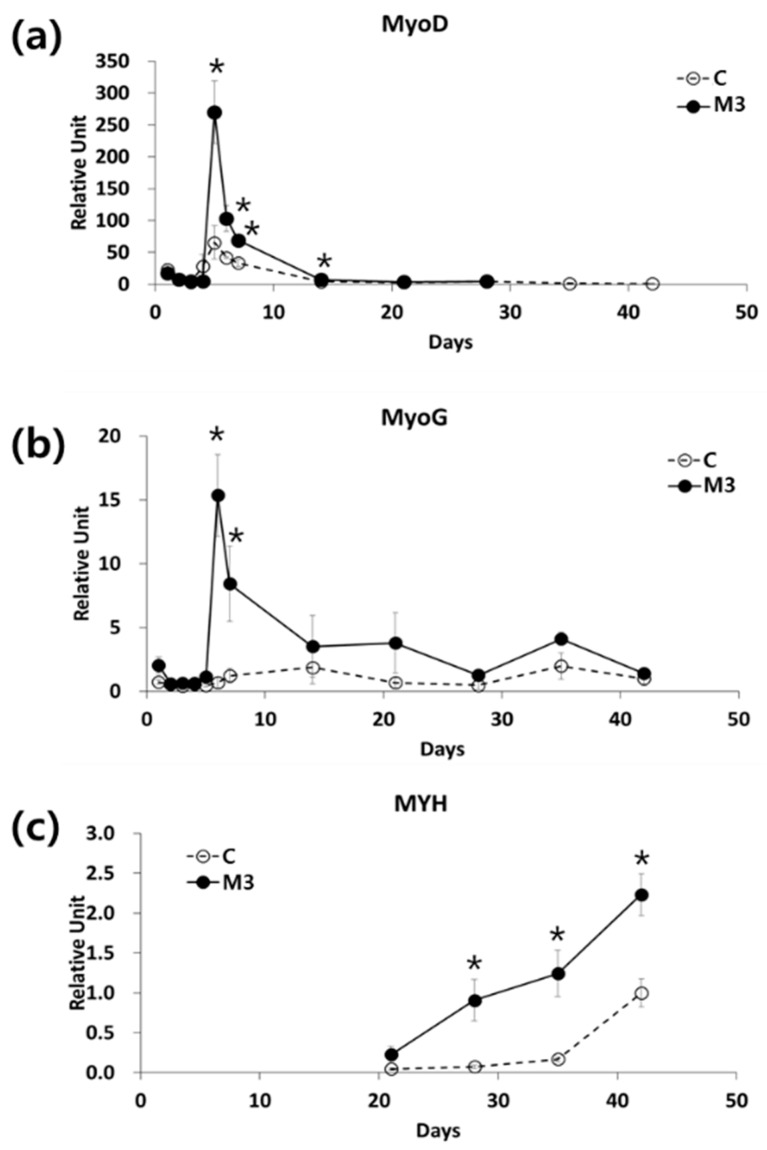 Effect of a combination of IL-6 and C2C12 CM on myogenic differentiation. mRNA expression of ( a ) MyoD, ( b ) myogenin (MyoG), and ( c ) myosin heavy chain (MYH) during myogenic differentiation, mRNA expression was analyzed by qRT-PCR. n = 3 independent experiments, each assay was performed in duplicate All values are expressed relative to the gene expression observed at 6 weeks using protocol C. * p