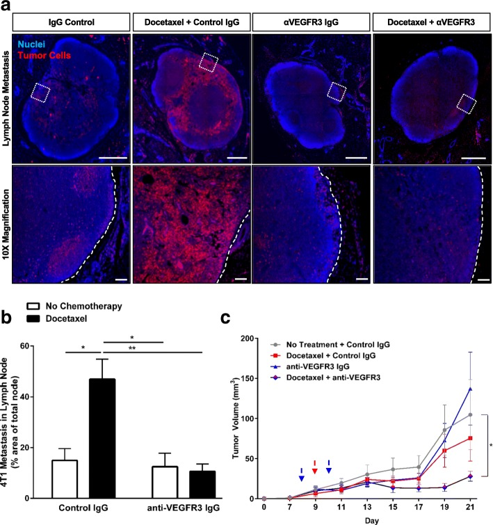 Blockade of VEGFR3 synergizes with docetaxel to reduce tumor growth and docetaxel-enhanced metastasis in 4T1 breast cancer. a Top panel , Representative images of 4T1 breast tumor cells (red) in the inguinal lymph nodes of mice treated with systemic docetaxel, 8 mg/kg IV (or vehicle control) and/or anti-VEGFR3 antibody, 400 μg total over 2 doses, IP (or control IgG) as detected by histological analysis of RFP-expressing tumor cells. Scale bar = 500 μm. Bottom panel, magnified images from boxed regions in top panel. Dotted white lines outline lymph node border. Scale bar = 100 μm. b Quantification of lymph node metastasis from whole lymph node scans as percent coverage of RFP+ area in whole lymph node sections. ( n ≥ 4/group) ( c ) Tumor volume of treated mice (mm 3 ) of 4T1 mice treated as described above via caliper measurements. Blue dashed arrow indicates dosing of anti-VEGFR3 antibody or control IgG and red dashed arrow indicates dosing of docetaxel or vehicle control. Curve was analyzed by MANOVA ( n = 5/group) with * p