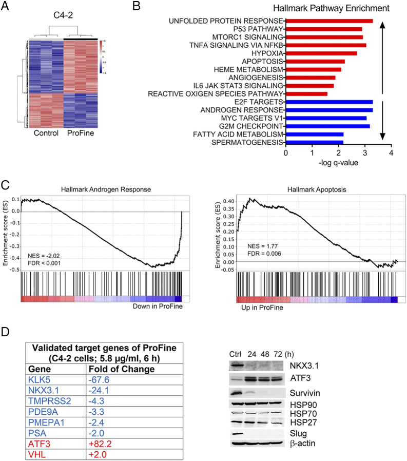 <t>ProFine</t> affects multiple genes in PCa cells. (A) Heat map of C4-2 transcriptome following the treatment with ProFine (5.8 μg/ml, 6 hours) or control (DMSO). Total RNAs were extracted from triplicate preparations. (B) Hallmark pathway gene set enrichment analysis of C4-2 cells treated with ProFine (5.8 μg/ml, 6 hours). (C) Pathway enrichment plots of androgen-responsive and apoptosis-related genes, respectively, in C4-2 cells treated with ProFine (5.8 μg/ml, 6 hours) or DMSO. (D) Selected target genes of ProFine in C4-2 cells, as validated by quantitative real-time PCR (left) and Western blot analyses (right, ProFine: 11.6 μg/ml; Ctrl: DMSO).