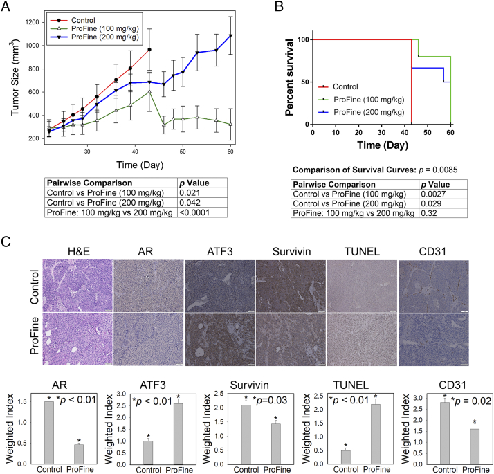 In vivo effect of oral ProFine on the subcutaneous growth of C4-2-Luc tumors in athymic nude mice. (A) Tumor size and pairwise comparison of C4-2-Luc xenografts treated with ProFine (100 mg/kg or 200 mg/kg) or vehicle control at the indicated times. (B) Log-rank survival curve and pairwise comparison of C4-2-Luc tumor-bearing animals treated with ProFine or vehicle control. (C) Upper: H E, IHC staining of putative ProFine targets, and TUNEL expression in C4-2-Luc xenograft tissues. Scale bar: 100 μm. Lower: quantitation of IHC and TUNEL expression. Weighted index was calculated as the average (intensity × percentage of positive cells) from three random tissue areas. P values were calculated using Student's t test.