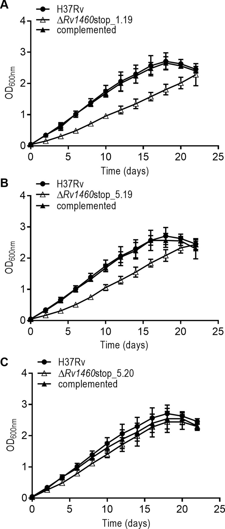 Rv1460 truncation mutants are impaired for growth in vitro under standard culture conditions. (A–C) Growth of H37Rv (wild-type), three truncation (Δ Rv1460 stop) mutants and their complemented strains under standard conditions in 7H9 OADC. The results shown are the mean and standard deviation of three experiments.