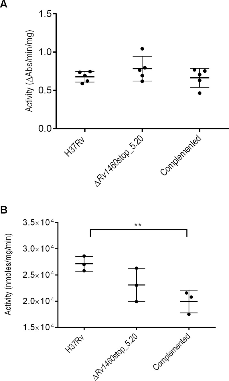 Succinate dehydrogenase and aconitase activity is not impaired in Rv1460 truncation mutants. (A) Succinate dehydrogenase activity and (B) aconitase activity in the H37Rv (wild-type), Δ Rv1460 stop_5.20 and complemented strains cultured in 7H9 OADC. Activity was standardised relative to total protein. The results shown are the mean and standard deviation of five and three experiments respectively.
