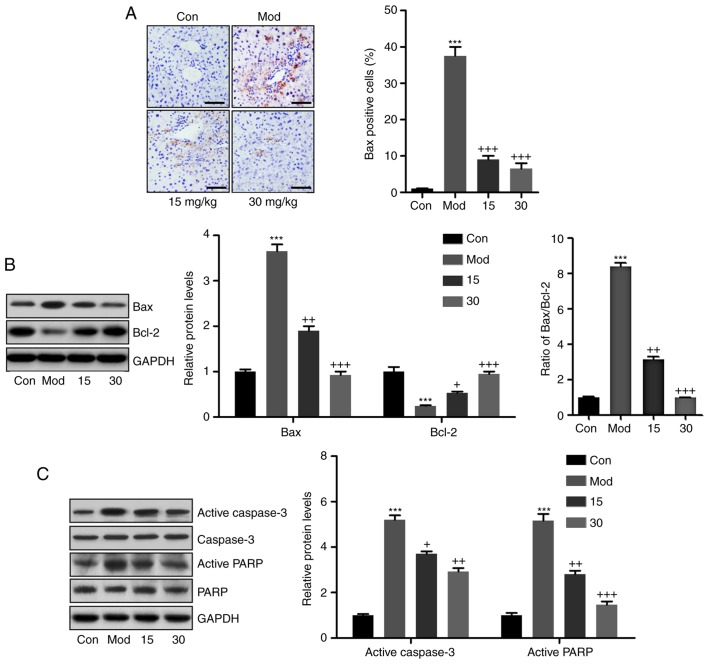 Breviscapine attenuates liver injury by inhibiting apoptosis in CCl 4 -induced mice. (A) Immunohistochemical assays were performed to evaluate Bax levels in the liver sections of mice subjected to different treatments. Scale bar, 100 µ m. (B) Bax and Bcl-2 protein levels were evaluated by western blot analysis. Quantified levels of Bax and Bcl-2 are displayed, and the ratio of Bax/Bcl-2 was exhibited. (C) Active caspase-3 and PARP-1 protein abundance was determined by western blot analysis. Representative blot images of proteins are displayed, accompanied with the quantified levels. Values are expressed as the mean ± standard error of the mean (n=10). *** P