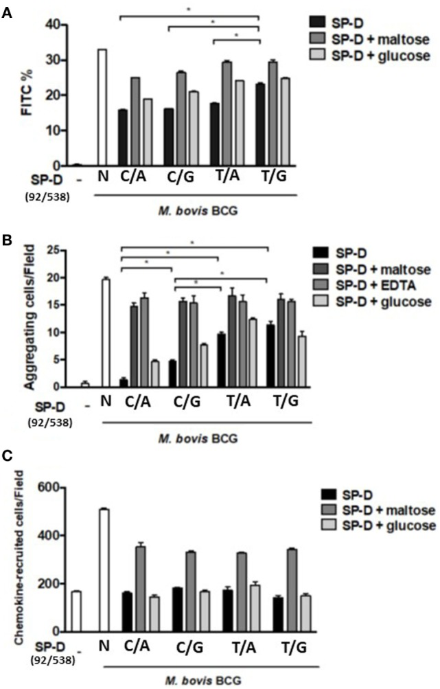 (A) Inhibition of alveolar macrophage phagocytosis of Mycobacterium bovis bacillus Calmette–Guérin ( M. bovis BCG) by native and four genetic variants of recombinant SP-D (rSP-D) protein. Macrophages infected with FITC-labeled M. bovis BCG were analyzed using flow cytometry to assess the effects of the four rSP-D variants on the phagocytosis of MH-S cells. rSP-D with residue 11Thr [(92C/538A) and (92C/538G)] inhibited phagocytosis of M. bovis BCG by MH-S cells to a significantly greater extent than rSP-D with residue 11Met [(92T/538A) and (92T/538G)] (* P