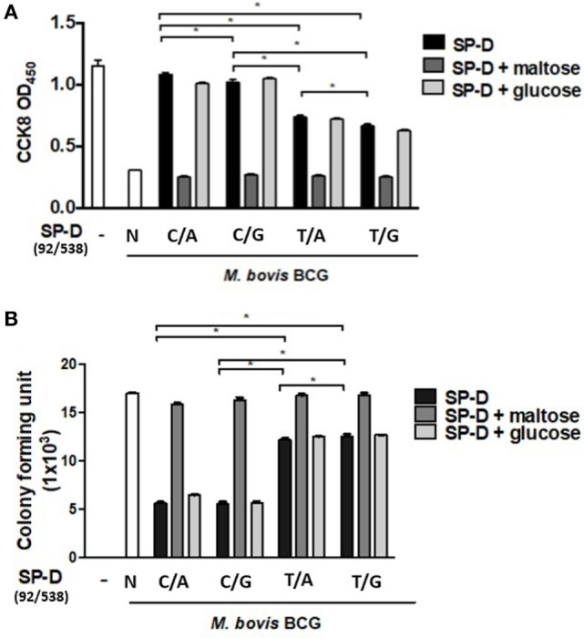 (A) Cell survival of Mycobacterium <t>bovis</t> bacillus Calmette–Guérin ( M. bovis <t>BCG)-infected</t> MH-S cells by native and four genetic variant recombinant SP-D (rSP-D) proteins measured using a Cell Counting Kit-8 assay. rSP-D with residue 11Thr [(92C/538A) and (92C/538G)] exhibited significantly better survival of infected MH-S cells than rSP-D with residue 11Met [(92T/538A) and (92T/538G)] (* P