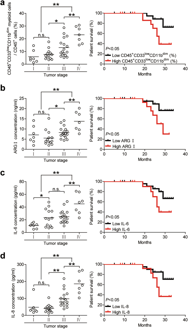 Peripheral blood CD45 + CD33 low CD11b dim myeloid cell frequency, and IL-6, IL-8, and arginase I levels correlate with GC tumor progression and decreased patient survival. Peripheral blood ( a ) CD45 + CD33 low CD11b dim myeloid cell percentages ( b ) arginase I concentration, ( c ) IL-6 concentration, and ( d ) IL-8 concentration were measured and categorized by patient TNM stage. Kaplan-Meier plots were calculated for overall patient survival according to ( a ) median peripheral blood CD45 + CD33 low CD11b dim myeloid cell percentage (9.2%) or ( b ) median arginase I concentration (7.52 ng/ml) or ( c ) median IL-6 concentration (22.37 pg/ml) or ( d ) median IL-8 concentration (61.61 pg/ml). * p