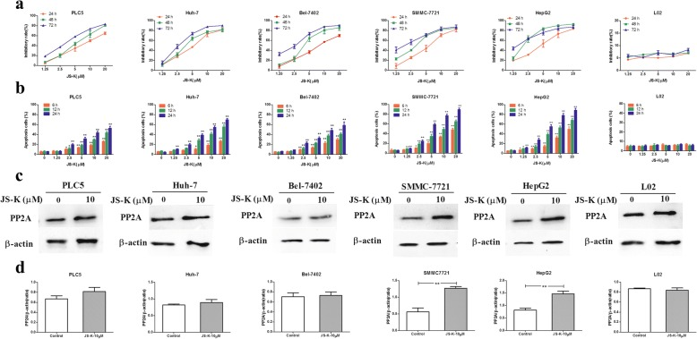 Differential effects of JS-K on cell death, apoptosis and PP2A activation in five HHC cells and L02 cells. a Dose-dependent effects of JS-K on cell death in the five HCC cells and L02 cells. The cells were exposed to JS-K at the indicated concentrations for 24, 48, 72 h. b Dose-dependent effects of JS-K on cell apoptosis in the five HCC cells and L02 cells. c - d Effects of JS-K on the expression of PP2A. The cells were treated with JS-K at the indicated concentration for 24 h. Cell lysates were prepared and assayed for PP2A by Western blotting. Data are mean ± SD. n = 3 for each concentration. * P