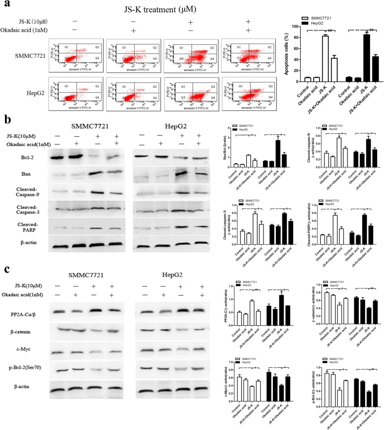 Effects of okadaic acid (OA) on JS-K-induced cell apoptosis and PP2A activation in SMMC7721 and HepG2 cells. a Effect of OA treatment as PP2A inhibitor on cell apoptosis. The cells were pretreated with OA (1 nM) for 1 h, and then stimulated with JS-K (10 μM) for 24 h. The apoptosis was assessed by flow cytometry. b Effect of OA treatment as PP2A inhibitor on the expression of apoptotic-related protein. c Effect of OA treatment as PP2A inhibitor on the expression of PP2A-C and its substrates. The cells were pretreated with OA (1 nM) for 1 h, and then stimulated with JS-K (10 μM) for 24 h. The expressions of protein were assessed by Western blotting analysis. Data are mean ± SD. n = 3 for each concentration. * P
