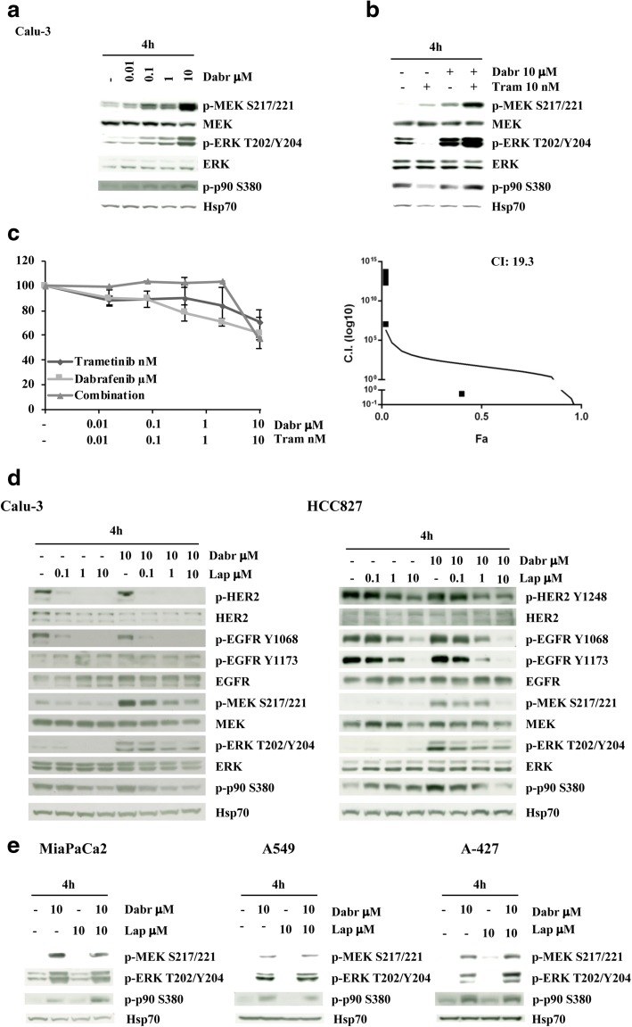 Selective BRAF inhibition induces EGFR family-dependent MAPK hyperactivation in Calu-3 cells. a and b The NSCLC cell line Calu-3 ( HER2 -amplified, KRAS -wt) was treated with increasing concentrations of dabrafenib (0.01–10 μM) alone a or in combination with trametinib (ratio 1:1000; b ) for 4 h. The cells were lysed and analyzed by Western Blotting using antibodies specific for the proteins indicated. Western blot with Hsp70 specific antibody is shown as protein loading and blotting control. c Calu-3 cells were treated with increasing concentrations of dabrafenib (0.01–10 μM) and trametinib (0.01 nM–10 nM) alone or in combination for 72 h. Cell viability was assessed by Crystal violet assay and pharmacologic interactions were evaluated using the Calcusyn software. The results represent the average ± SD of three independent experiments. d Calu-3 and HCC827 ( EGFR -mut) cells were treated with increasing concentrations of dabrafenib (0.1–10 μM) and lapatinib (0.1–10 μM) for 4 h. The proteins were subjected to Western Blotting and analyzed for the indicated antibodies. e MiaPaCa2, A549 and A427 cells were treated with dabrafenib (10 μM) and lapatinib (10 μM) alone or in combination for 4 h. The cells were lysed and analyzed by Western Blotting using antibodies specific for the protein above indicated