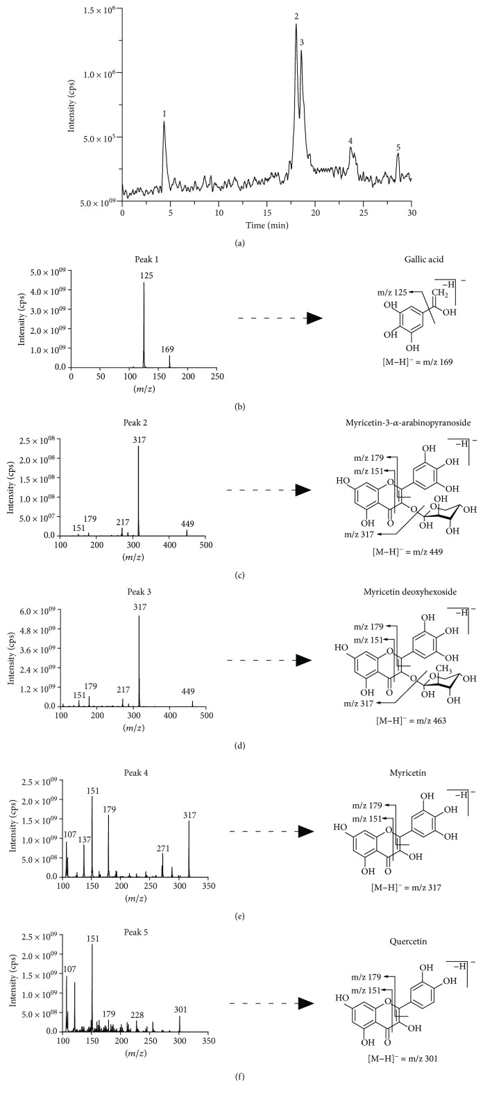 LC-MS/MS analysis of <t>PESc</t> polyphenol content. <t>RP-HPLC-MS/MS</t> chromatographic profile of PESc (a) was obtained. PESc was analyzed by MS/MS using the MRM method. Gallic acid was detected by using m/z 169/125, m/z 169/97, and m/z 169/79. For myricetin, MRM transitions corresponded to m/z 317/271, m/z 317/151, and m/z 317/179 while for glycosylated forms of myricetin m/z 449/316, m/z 449/271, and m/z 449/179. Finally, quercetin was followed by the m/z 301/151 and m/z 301/179. Chemical identification of the structure of the compounds present in PESc was analyzed by mass spectrometry. Representative structures and fragmentation patters of gallic acid (b); myricetin-3- α -arabinopyranoside (c), myricetin deoxyhexoside (d), myricetin (e), and quercetin (f) are shown. Data is representative of at least three independent experiments.