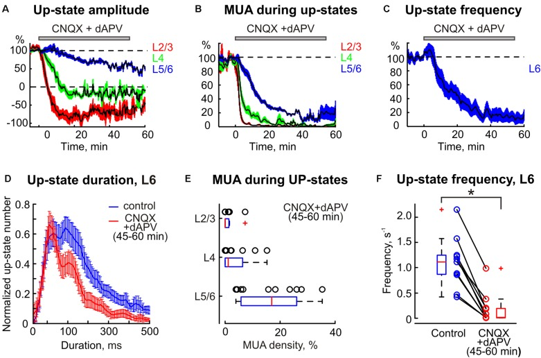 The statistical data on CNQX and dAPV action on spontaneous barrel cortex activity. The decrease in up-states amplitude (A) , MUA density during up-states (B) , and up-states frequency (C) in different layers of the cortical barrel column following application of CNQX/dAPV (application time shown with gray bar above each plot). The colored areas surrounding each curve show SE bands. (D) The up-state duration distribution in control and after the drugs application. (A–D) Show averaged data from 11 animals and two concentrations, 170 μM CNQX/700 μM dAPV and 0.5 mM CNQX/2 mM dAPV. (E) Group data on normalized MUA density in different cortical layers during a steady state of CNQX and dAPV effect. (F) Group data on up-states frequency in control and after CNQX/dAPV application. The open circles on (E,F) correspond to individual experiments, and the red line on boxplots is a median. ∗ p