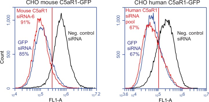 Mouse C5aR1 siRNA and human C5aR1 siRNA pool result in receptor knockdown. CHO cells expressing mouse C5aR1-GFP were transfected with 100 nM mouse C5aR1 ON-TARGETplus SMART siRNA–6, 100 nM GFP siRNA (positive control), or 100 nM negative control siRNA. 72 h post transfection cells were analyzed by flow cytometry to measure the relative expression of mouse C5aR1-GFP (left panel). CHO cells expressing human C5aR1-GFP were transfected with 100 nM human C5aR1 ON-TARGETplus SMARTpool siRNA, 100 nM GFP siRNA (positive control), or 100 nM negative control siRNA (right panel). Relative knockdown is based on the percentage of the cells that are to the left of the gate relative to the negative control sample. The experiment was carried out twice with similar results.