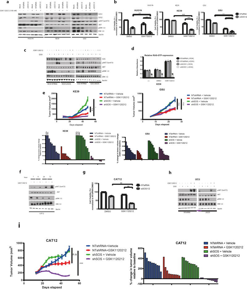 Genetic targeting of SOS enhances efficacy of MEK inhibition in KRAS -amplified gastric cancer models in vitro and in vivo Representative western blot analysis (of n= 3 independent experiments) of GC KRAS amplified (HUG1N/KE39) and KRAS mutant (GSU) was performed on cells following transfection with a combination of 20 nM pooled siRNAs specific to SOS1 and SOS2 (siSOS1/2) or 20 nM non-targeting control siRNA for 48 hours and then treated with 100 nM GSK1120212 for 24 hours. Protein lysates were harvested and probed for antibodies to SOS1, SOS2, pAKT (Ser473), total <t>AKT,</t> pERK1/2 and total <t>ERK1/2</t> with B-actin used as a loading control Bar graph measuring percentage cell viability (of n= 3 independent experiments) in KRAS amplified (KE39/HUG1N) and KRAS mutant (GSU) GC lines following transfection with SOS1 and SOS2 siRNAs for 48 hours followed by treatment with 100 nM GSK1120212 for 72 hours. Cell viability was determined using Cell Titer Glo cell viability assay. Bar graphs display mean ± s.d. Comparisons were made using 2-tailed Student's t-test (*) P