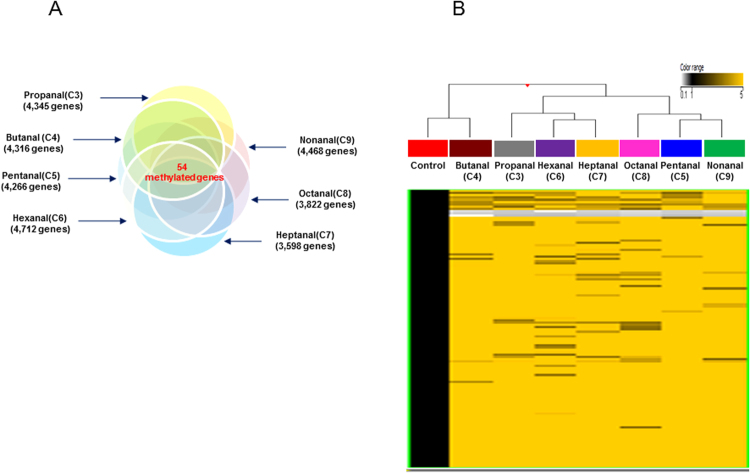 ( A ) Venn diagram shows the differentially methylated genes exposed under each aldehyde exposure. The intersection regions are the number of common differentially methylated genes following exposure to the seven aldehydes. ( B ) Hierarchical clustering of methylated genes that commonly altered <t>DNA</t> methylation in <t>A549</t> cells exposed to the seven aldehydes with a fold-change ≥3.0-fold and p -value