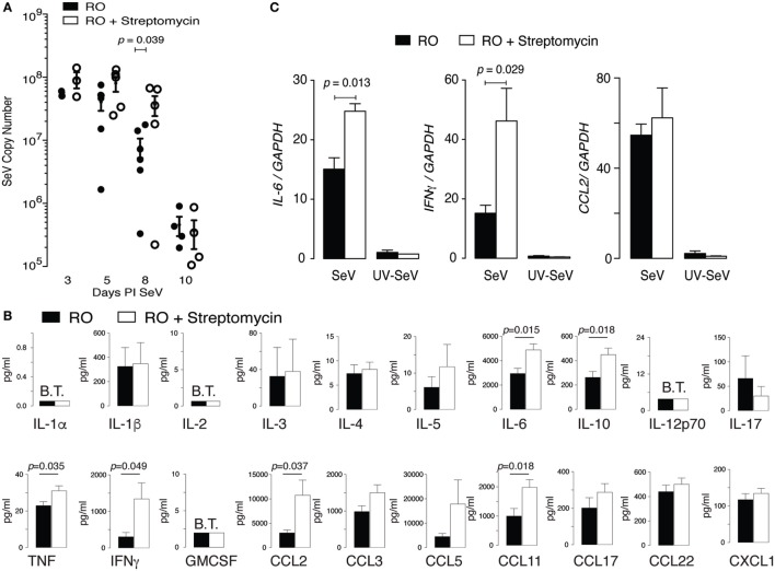 Altered intestinal microbiota augments pulmonary cytokine response to Sendai virus (SeV), but does not impair viral clearance. Mice were placed on reverse osmosis (RO) or RO + streptomycin water, and 2 weeks later inoculated with SeV. (A) RT polymerase chain reaction (PCR) quantification of SeV copy number in whole lungs at the indicated days post inoculation (PI) SeV ( n = 3–6 mice/day and group). (B) Expression of cytokines in the bronchoalveolar lavage fluid of mice 8 days PI SeV. Data are array results from a commercially available <t>ELISA</t> protein array (data combined from five separate experiments with n ≥ 2/group/experiment, with samples run in duplicate); note increased IL-6, IFNγ, and <t>CCL2</t> (MCP-1) protein. (C) Message for Il6 and Ifnγ , but not Ccl2 , was increased in whole lung of SeV-infected mice that had received streptomycin. Specific cytokine mRNA levels were assessed by RT PCR in whole of lung of mice at day 8 PI SeV or UV inactivated SeV ( n = 3/group and treatment) and normalized to Gapdh copy number.