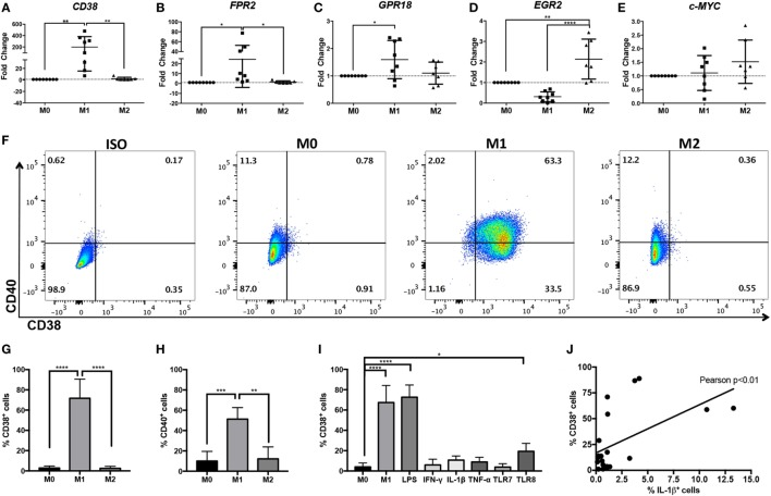 Increased CD38 expression in human M(LPS + IFN-γ) monocyte-derived macrophages (MDMs). Expression of human CD38 (A) , FPR2 (B) , GPR18 (C) , EGR2 (D) , and c-MYC (E) genes in human MDMs in unstimulated (M0), M(LPS + IFN-γ) (labeled M1 throughout figure), or M(IL-4) (labeled M2 throughout figure) human MDMs, as measured by real-time PCR. Gene expression level is expressed as fold change ± SD relative to M0 condition ( n = 7–8 independent samples, each generated from different donors; each independent sample value corresponds to the average of two technical replicates). One-way analysis of variance (ANOVA) with p values adjusted for multiple comparisons using Sidak's multiple comparisons test, * p