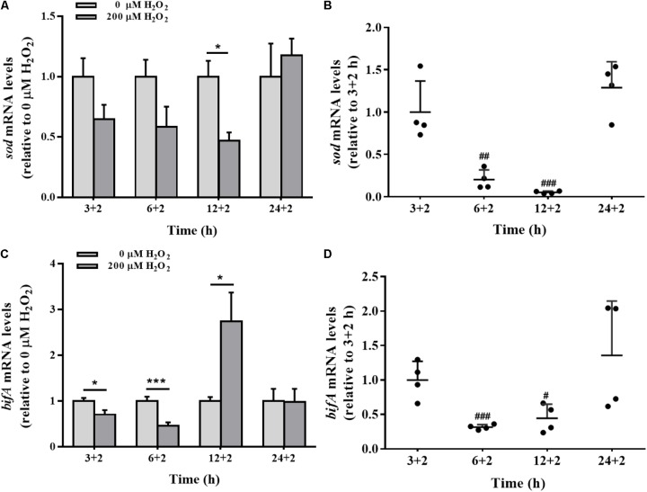 The sod and bifA mRNA levels in biofilm cells as well as during biofilm development with exogenous H 2 O 2 . sod (A) and bifA (C) mRNA levels were detected by qRT-PCR analysis in colonized cells incubated with 200 μM H 2 O 2 for 2 h after 3 h, 6, 12, and 24 h cultivation for adhesion, respectively. Relative gene expression levels of sod and bifA were normalized to 16s rRNA ( n = 4), respectively. The cellular mRNA levels of sod (B) and bifA (D) during different stages of biofilm formation. Data were expressed as mean ± SEM. Significance, ∗ P