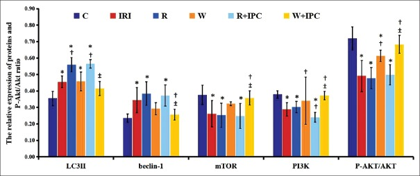 Expressions of myocardial LC3-II, beclin-1, mTOR, PI3K, and P-Akt/Akt ratio measured by Western blotting in different rat groups. Data are presented as mean ± standard deviation, n = 5 in each group. C: Control group; IRI: Ischemia/reperfusion injury group; R: Rapamycin group; W: Wortmannin group; R + IPC: Rapamycin + IPC group; W + IPC: Wortmannin + IPC group. One-way analysis of variance for intergroup comparisons. * P