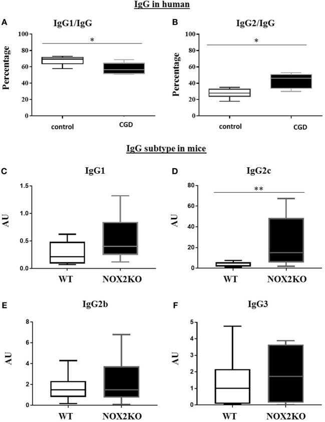 Relative levels of IgG1 and IgG2 in CGD patients and healthy donors and basal levels of immunoglobulin subtypes in wild-type (WT) and NOX2-deficient mice. (A,B) Proportion of serum IgG1 and IgG2 subtypes relative to total IgG. Basal level of IgG1 (C) , IgG2c (D) , IgG2b (E) and IgG3 (F) in WT and NOX2 deficient mice (NOX2KO). * p