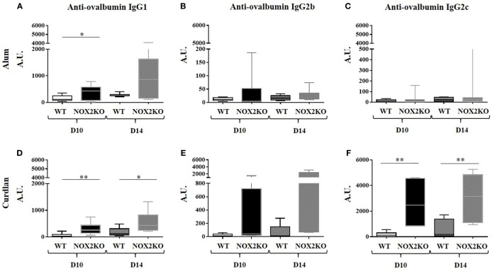 Enhanced immunoglobulin generation in CGD mice: IgG subtype and adjuvant dependence. Mice were immunized by subcutaneous injection into the outer ear of ovalbumin with either alum (A–C) or curdlan (D–F) as adjuvant. Levels of Anti-ovalbumin IgG1 (A,D) , <t>IgG2b</t> (B,E) and IgG2c (C,F) were measured 10 and 14 days following immunization ( n = 12). * p