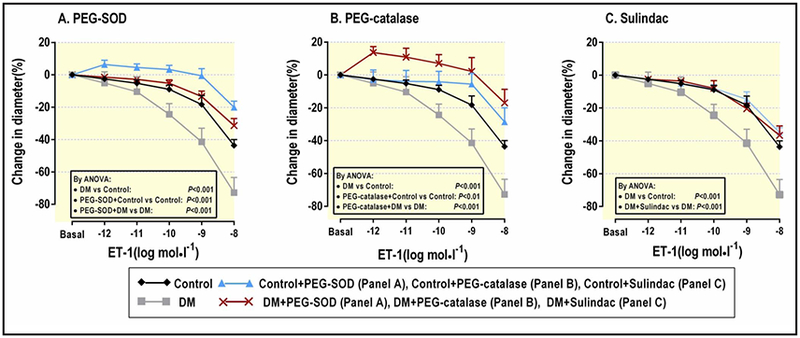 Meant ± SEM values (n =5–6) for ET-1 responses of afferent arterioles from control mice in the absence (black diamonds with black line) or presence of <t>PEG-SOD</t> (200 units mL −1 ) (A) or PEG-catalase (1000 units mL −1 ) (B) or <t>Sulindac</t> (40 mg·kg −1 day −1 for 4 weeks) (C) (blue triangles with blue line), diabetic mice in the absence (grey squares with grey line) or presence of PEG-SOD (A) or PEG catalase (B) or Sulindac) (C) (red crosses with red line). Data are shown for changes in luminal dimeters of afferent arterioles in response to ET-1 (10 −12 - 10 −8 mol·l −1 ). ANOVA, analysis of variance; ET-1, endotheline-1; PEG, polyethylene glycol; SOD, superoxide dismutase; DM, diabetes mellitus.