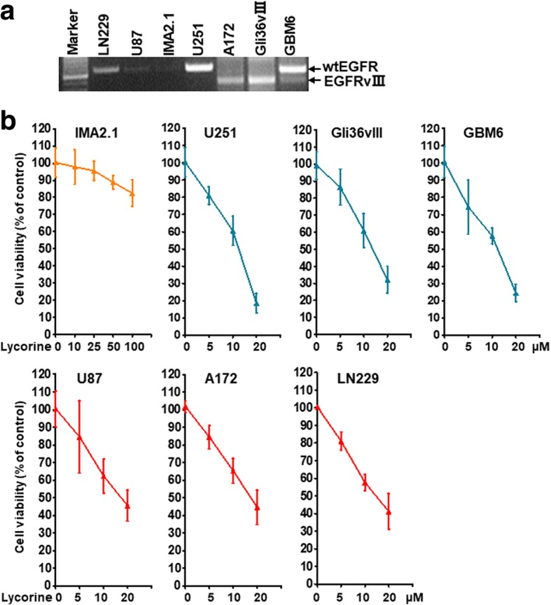 Effects of Lycorine on cell viability of GBM cells holding different EGFR status. a Expression of EGFR mRNA on different GBM cell lines. Surface EGFR expression on glioma cell lines (U87, wild type EGFR; LN229, wild type EGFR amplification, U251, wild type EGFR amplification, A172, EGFRvIII mutant, Gli36vIII, EGFRvIII mutant, GBM6, wild type EGFR and EGFRvIII co-existing) and a healthy normal human IMA2.1 astrocytes was monitored by RT-PCR. b Lycorine suppresses GBM cell's proliferation independent of EGFR mutation status but dependent of EGFR expression level. The cell viability assay stained by SRB was performed as described in Methods. All data are represented as mean ± S.D. from triplicate wells