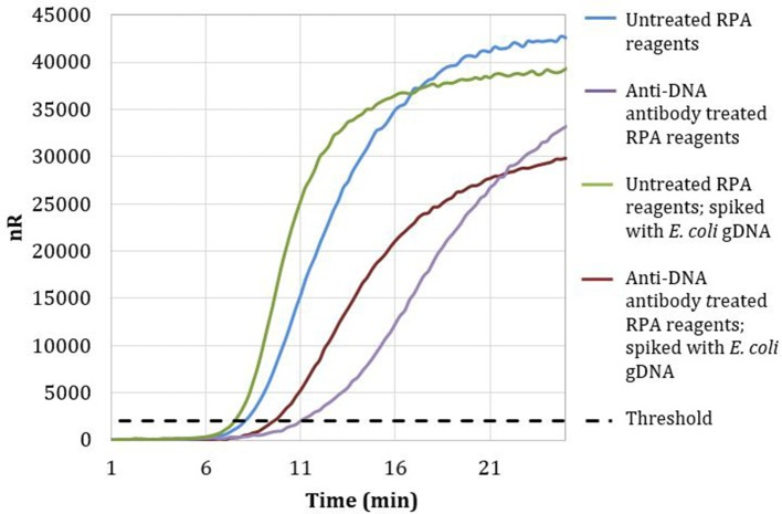 Amplification curves of RPA reactions carried out with RPA primer set 1 and untreated (blue) or treated (purple) reagents. Untreated reactions spiked with 100 copies of E. coli <t>gDNA</t> (green) exhibited a threshold time of 7.25 min, whereas <t>anti-DNA</t> antibody treated reactions spiked with 100 copies of E. coli gDNA (maroon) exhibited a threshold time of 9.5 min.