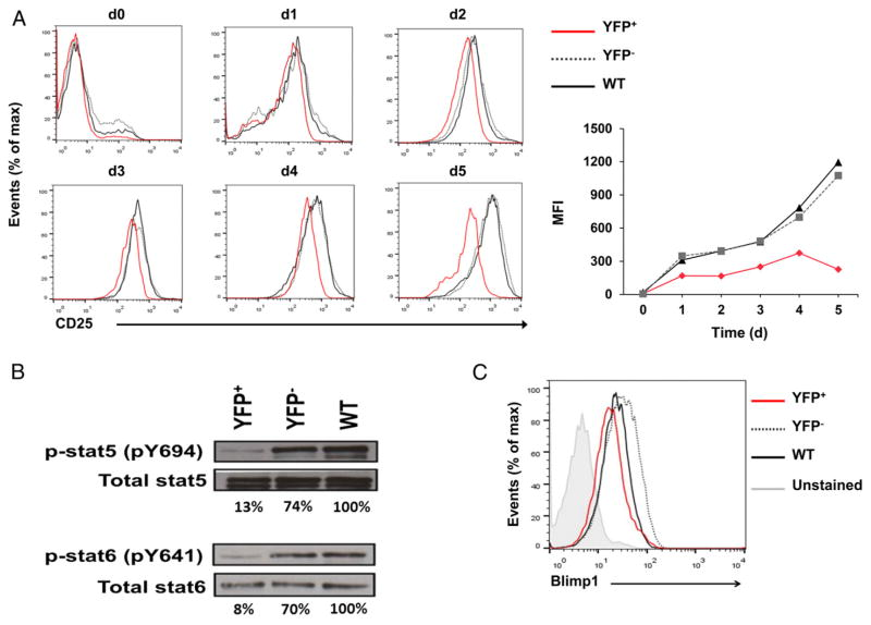 HuR deficiency alters the expression of components of the IL-2 signaling pathway ( A ) Flow cytometry of kinetic changes in CD25 protein expression of activated YFP + , YFP − , and WT CD4 + T cells on days 0–5. ( B ) p-Stat5, p-Stat6, total Stat5, and total Stat6 protein levels in activated YFP + , YFP − , and WT CD4 + T cells on day 4 postactivation. ( C ) Blimp1 protein expression in activated YFP + , YFP − , and WT CD4 + T cells on day 4 postactivation. Data are representative of two (B) or three (A and C) independent experiments. nonpolarizing conditions on days 0 to 5. ( E ) Transcriptional measurement using nascent RNA capture assay and RT-PCR analysis of Il2 . Data are combined from three (B, C, and E) or four [(A), right panel and (D)] independent experiments, along with representative flow cytometry plots (A, left panel). Error bars represent mean + SEM of three (B, C, and E) or four [(A), right panel] independent experiments. The p values in (D) were calculated based on YFP + versus YFP − and WT. * p