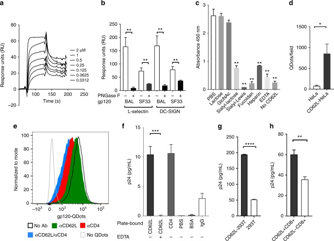 L-selectin binds to HIV envelope gp120. a Blank subtracted sensorgrams of serially diluted recombinant gp120 BAL binding to immobilized CD62L-Fc. b Binding of glycosylated and deglycosylated gp120 at ~2 µM concentration to immobilized CD62L-Fc and DCSIGN-Fc. The BIAcore bindings were performed as triplicates using PNGase F treated and untreated gp120s at equal concentrations. Deglycosylated gp120 BAL and gp120 SF33 bound significantly less to both CD62L and DC-SIGN compared to their glycosylated gp120. c ELISA binding of CD62L-Fc to immobilized gp120 in the presence of 10 mM lactose, GlcNAc ( N -acetyl- d -glucosamine), sialyl-lactose, sialyl-Lewis x (sLe x ), fucoidan, heparin, and <t>EDTA.</t> sLe x , fucoidan, and heparin are known ligands of CD62L and inhibited gp120 binding. The p values are calculated with respect to PBS control. d Number of gp120-QDots bound to untransfected or L-selectin-transfected HeLa cells and counted using TIRF microscopy. e Flow cytometry analysis of gp120-QDots binding to PBMC in the presence and absence of anti-CD4 (RPA-T4), and anti-CD62L (DREG-56) antibodies. f Capture of HIV-1 BAL virus (1:1000 dilution) with plate-immobilized 10 µg soluble CD62L in the presence and absence of 5 mM EDTA, CD4, BSA, IgG or blank (PBS control). The captured virus was quantified using p24 ELISA (PerkinElmer). g The binding of HIV-1 BAL virus (1:1000 dilution) to 10 6 CD62L-transfected or untransfected 293T cells. h The binding of HIV-1 BAL virus to 10 6 sorted CD62L + or CD62L − CD8 + T cells. The error bars indicate standard deviations from the means. The p values of all figures are calculated using unpaired Student's t test with * p ≤ 0.05, ** p ≤ 0.01, *** p ≤ 0.001, **** p ≤ 0.0001. The results included in panels a − d , f − h are from at least two independent experiments with all data included