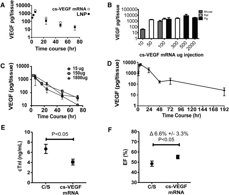 VEGF-A Protein Pharmacokinetics and Effect on Cardiac Troponin I Release and Left Ventricular Function Post-myocardial Infarction following Intracardiac Injection of Purified VEGF mRNA in a Biologically Compatible Citrate-Saline Formulation (cs- VEGF mRNA) (A) VEGF-A protein pharmacokinetics after single cardiac injections of cs- VEGF mRNA versus RNAiMax (lipid nanoparticle [LNP]) in the mouse over 72 hr (n = 3 per time point and formulation). (B) Cross-species comparison of VEGF-A protein levels following increasing intracardiac dosing of cs- VEGF mRNA (n = 3–4 for each dose and species). (C) Pharmacokinetics of VEGF-A protein produced by increasing intracardiac doses, 15, 150, and 1,800 μg, of cs- VEGF mRNA (n = 3 per time point and dose) in the rat. (D) 100 μg of cs- VEGF mRNA expressed up to 192 hr (n = 3 per time point). (E) Circulating cardiac troponin I (cTnI) levels at day 1 following permanent occlusion of the left anterior descending coronary artery to induce MI in the rat. Citrate-saline vehicle (C/S, n = 8) or cs- VEGF mRNA (150 and 1,800 μg dose groups pooled; n = 19) was intracardially injected at the time of the induction of the MI. (F) Left ventricular ejection fraction (EF), assessed by cardiac magnetic resonance imaging 8 days after the occlusion of the coronary artery. Data are means ± SEM.