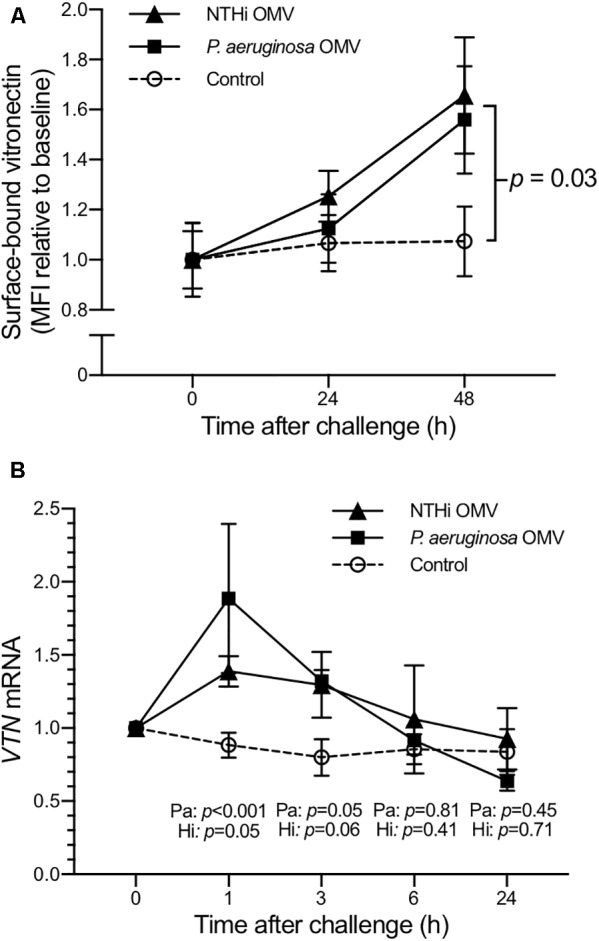 Human type II alveolar cells (A549) produce vitronectin after stimulation with bacterial OMV. Surface-bound vitronectin was detected on A549 epithelial cells by flow cytometry (A) . Cells were starved for 18 h prior to the experiment. Following the addition of OMV (5 μg) from P. aeruginosa (solid squares) or nontypeable H. influenzae (solid triangles), the cells were harvested at indicated time points. Untreated cells were used as controls (open circles). Mean values of two biological replicates are shown, each comprising three technical repetitions. ANOVA was used to calculate the p -values. A corresponding increase in vitronectin ( VTN ) mRNA levels was seen 1–3 h after challenge with 1 μg OMV from either bacterial species (B) . Symbols represent mean values and error bars represent standard error of the mean of three biological replicates. The difference in mean values between respective bacterial species and controls were assessed using a t -test.