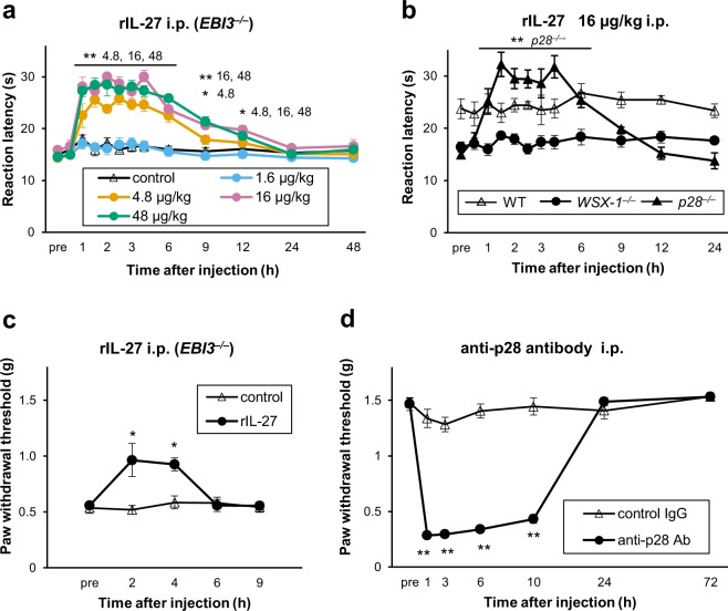 IL-27 is an endogenous regulator of thermal and mechanical nociceptive responses. ( a ) Single i.p. injection of rIL-27 dose-dependently prolonged hot-plate latency in EBI3 −/− mice. ( b ) Quick restoration of hot-plate latencies in p28 −/− , but not WSX-1 −/− and WT mice following a single i.p. injection of rIL-27 (16 µg/kg). ( c ) A single i.p. injection of rIL-27 (16 µg/kg) also significantly alleviated mechanical hypersensitivity in EBI3 −/− mice. ( d ) A single i.p. injection of neutralising antibody against p28 (1.6 mg/kg) decreased the paw withdrawal threshold in naïve WT mice. n = 5 animals/group. * P