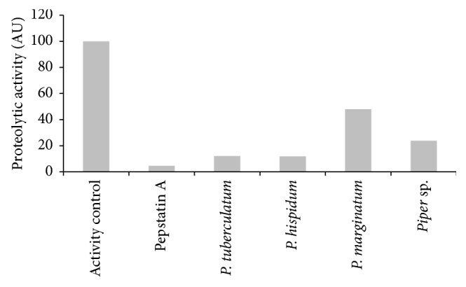 Proteolytic activity of rhizopuspepsin after overnight treatment with 48 µ g/ml of Piper essential oils. The plates were incubated at 37°C.