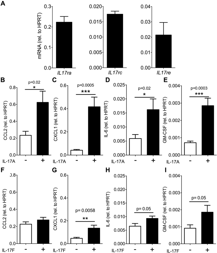 IL-17A Promotes Inflammatory Cytokine Expression in Endothelial Cells (A) IL-17 receptor A ( Il17ra ) and auxiliary subunits Il17rc and Il17re mRNA expression was determined by using quantitative polymerase chain reaction (qPCR). Il17rb messenger ribonucleic acid (mRNA) was below detection limit (n = 4, 2 exp.). (B to I) Endothelial cells were stimulated for 2 h with 50 ng/ml IL-17A (B to E) or IL-17F (F to I) . CCL2 (B and F) , CXCL1 (C and G) , IL-6 (D and H) , and granulocyte-macrophage colony-stimulating factor (GM-CSF) (E and I) cytokine expression quantified by using qPCR (n = 8 from 4 independent experiments for each cytokine).