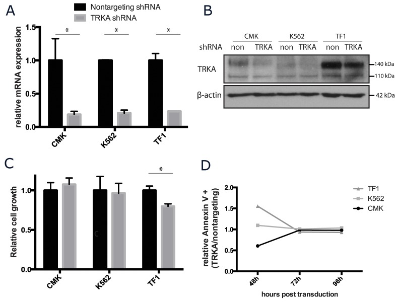 TRKA is not essential for the growth or survival of AML cell lines in vitro CMK, K562, and TF-1 cells were stably transfected with shRNA against TRKA or a scrambled control (ctrl) and monitored for changes in growth and viability. (A) qRT-PCR analysis of the NTRK1 mRNA levels in the transduced cell lines 7 days after transduction. Values were normalized to GAPDH and results are displayed as the mean mRNA (+s.d.) relative to the cells transfected with the control vector. There is a consistent knockdown of approximately 70% at the mRNA level across the 3 lines. (B) Western blot of total TRKA protein 7 days after transduction with either a nontargeting or TRKA shRNA. (C) 48 hours after transduction, cells were plated at a density of 5×10 4 cells/mL and cultured for 5 days. Cell growth and viability were stained with Trypan Blue and assessed using the ViCell. (D) Apoptosis was tracked in both control and knockdown cells using Annexin V staining via flow cytometry.