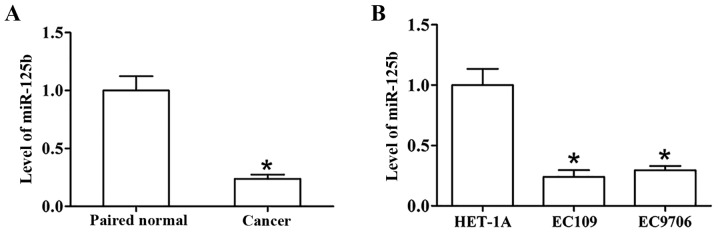 The expression of miR-125b in ESCC tissues and cells. (A) The expression of miR-125b in ESCC and paired normal tissues was examined by qRT-PCR. (B) The expression of miR-125b in ESCC cell lines and a human esophageal epithelial cell line was examined by qRT-PCR. *P