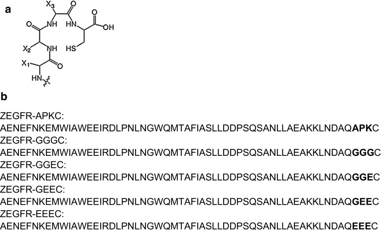 Peptide-based chelators used for labeling with 99m Tc. a General structure of the N 3 S chelators formed by a C-terminal cysteine and three adjacent amino acids. X 1 , X 2 and X 3 denote the side chains of the amino acids. b Sequences of EGFR-binding affibody molecules evaluated in this study. The variable amino acids are marked in bold