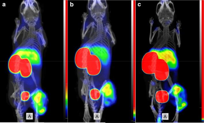 Imaging of EGFR-expressing A431 xenografts in BALB/C nu/nu mice using a 99m Tc-ZEGFR-GGEC, b 99m Tc-ZEGFR-GEEC and c 99m Tc-ZEGFR-EEEC at 6 h after injection. The scales are adjusted to first red pixels in tumors