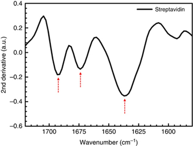 Secondary structure components of the amide I absorption band of streptavidin immobilized via biotin binding. The three minima correspond to native β-sheets (within 1615–1645 cm −1 and 1680–1695 cm −1 ) and β turns (within 1665–1690 cm −1 ) of secondary structures of the immobilized protein measured in phosphate buffer saline (PBS), on one array with L : 1900 nm and P : 2.5 μm.