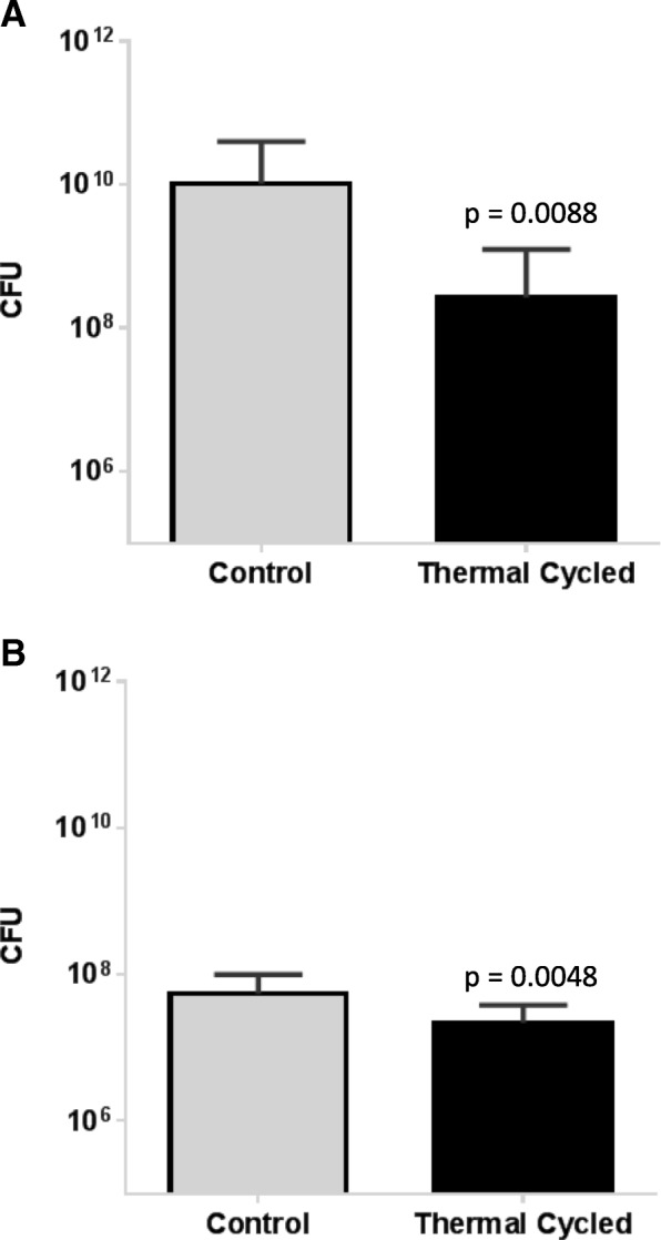 Growth of S. aureus Xen29 was assessed on control and thermal cycled stainless steel ( a ) and titanium plates ( b ) quantifying CFUs. Data represent the mean of three (stainless steel) or two (titanium plates) repeats, respectively. Error bars show standard deviation
