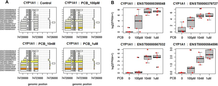 Differential  CYP1A1  expression analysis using RNA-seq in HepaRG cells exposed to three concentrations of PCB 126.  a  Structure and expression levels of 12 distinct isoforms of  CYP1A1  across the different treatment groups. Differences in expression levels are displayed in varying shades of yellow. The ENST00000395048 isoform of  CYP1A1  is expressed at a much higher level than the others, as indicated by the dark orange color.  b  FPKM distributions of four  CYP1A1  transcripts displayed as box-and-whiskers plots. All four isoforms have their expression significantly altered ( q