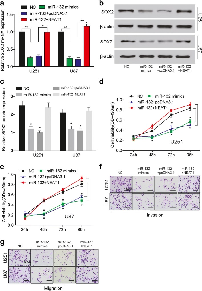 NEAT1 elevates SOX2 expression through targeting miR-132 to promote glioma progression. a The relative mRNA expression of SOX2 in U251 and U87 cells decreases in miR-132 mimics group compared with NC, increases in miR-132 + NEAT1 group compared with miR-132 + pcDNA3.1, and almost remains the same between NC and miR-132 + NEAT1 groups. GAPDH is the internal control. * P
