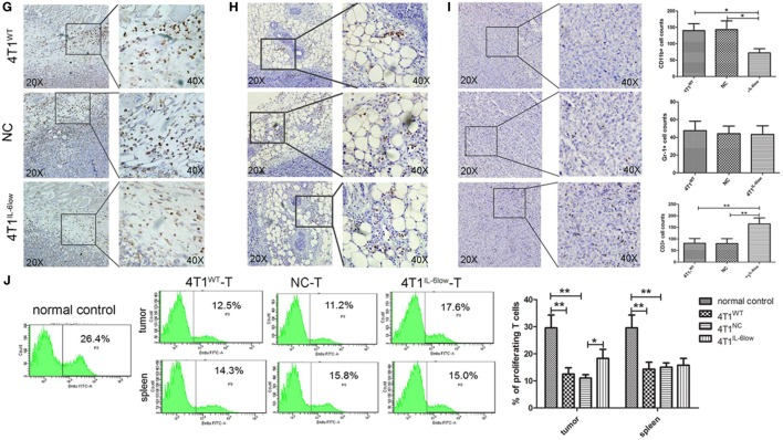 Tumor-derived interleukin-6 (IL-6) promotes the accumulation of CD11b + Gr-1 − F4/80 − MHCII − early-stage MDSCs (e-MDSCs) in tumors. Infiltrated CD45 + cells were gated. (A) The percentage of myeloid-derived suppressor cells (MDSCs) in normal spleen, tumors, and spleens resulting from 4T1 mammary cancer cells detected by flow cytometry. (B) The percentage of the indicated cell subsets in tumors and spleens from mice bearing different IL-6-expressing tumors was determined by flow cytometry. CD11b + Gr-1 − e-MDSCs from spleens and tumors were isolated, and the percentage of CD11b + Gr-1 − F4/80 + MHCII − cells and CD11b + Gr-1 − F4/80 − MHCII + cells in spleens (C) and tumors (D) was determined using flow cytometry. (E) The correlation analysis between tumor volumes and the percentage of tumor-infiltrating CD11b + Gr-1 − F4/80 − MHCII − e-MDSCs or CD11b + Gr-1 + MDSCs ( R 2 = 0.4491 vs. R 2 = 0.1482, P