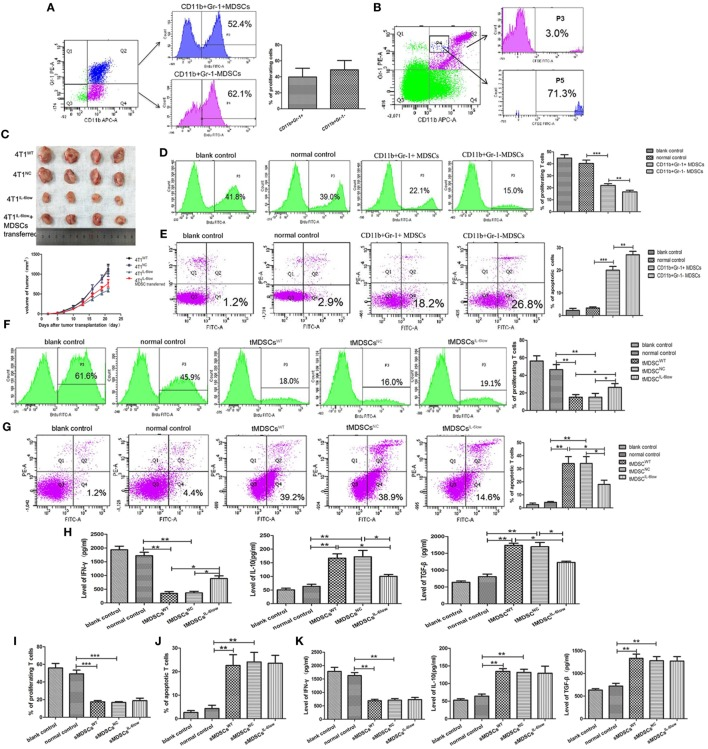 CD11b + Gr-1 − F4/80 − MHCII − early-stage MDSCs (e-MDSCs) could switch to CD11b + Gr-1 + myeloid-derived suppressor cells (MDSCs) and exerted stronger T cell immunosuppression. (A) BrdU (50 mg/kg) was injected in 4T1 WT -bearing mice by tail vein. Seventy-two hours later, CD11b + Gr-1 − MDSCs and CD11b + Gr-1 + MDSCs labeled with BrdU in tumors were detected by flow cytometry. (B) CD11b + Gr-1 − cells were isolated from 4T1 WT tumors and labeled with CSFE (0.5 µM) for 20 min in vitro . Then, the labeled cells were transferred back to normal BALB/c mice. After 96 h, CD11b + Gr-1 + cells in spleens were gated, and cells labeled with CSFE were detected. (C) CD11b + Gr-1 − MDSCs were separated from 4T1 WT tumors and transferred into mice bearing 4T1 IL-6low tumors (2 × 10 6 /twice/week), and the size of tumors was monitored. CD11b + Gr-1 + MDSC or CD11b + Gr-1 − e-MDSC was isolated from tumors and incubated with T cells in vitro . (D) The proliferation of T cells was detected by flow cytometry for Brdu + cells. (E) Apoptotic T cells (Annexin V + PI − ) were determined by flow cytometry. tMDSCs WT , tMDSCs NC , or tMDSCs IL-6low were isolated from tumors and cocultured with T cells, respectively. (F) The proliferation of T cells was detected by flow cytometry for Brdu + cells. (G) Apoptotic T cells (Annexin V + PI − ) were determined by flow cytometry. (H) IFN-γ, IL-10, and TGF-β secreted by T cells were detected using enzyme-linked immunosorbent assay (ELISA). sMDSCs WT , sMDSCs NC , or sMDSCs IL-6low were isolated from spleens and cocultured with T cells, respectively. (I) The proliferation of T cells was detected by flow cytometry for Brdu + cells. (J) Apoptotic T cells (Annexin V + PI − ) were determined by flow cytometry. (K) IFN-γ, IL-10, and TGF-β secreted by the T cells were detected using ELISA (** P