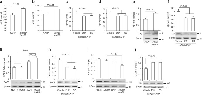 Effect of EP overexpression on cerebral Aβ accumulation. ELISA for measurement of Aβ40 ( a , c ) and Aβ42 ( b , d ) in the entorhinal cortex of Tg mAPP and Tg Sh3gl2 /mAPP mice at the age of 5–5.5 months. EUK-134 (EUK, 2 mg/kg) ( c , d ) or SB203580 (SB, 0.5 mg/kg) ( c , d ) was administered to Tg Sh3gl2 /mAPP mice once a day for 3 weeks and then cortical tissues were subjected to Aβ measurement at the age of 5–5.5 months. Date are shown as mean ± s.e.m., n = 3–6 per group (one-way ANOVA in a–d ). Quantification of immunoreactive bands for Aβ ( e ), BACE1 ( g ), or IDE ( i ) in the indicated Tg mice at the age of 5–5.5 months. Quantification of immunoreactive bands for Aβ ( f ), BACE1 ( h ), or IDE ( j ) in Tg Sh3gl2 .mAPP mice treated with EUK or P38 inhibitor (SB) relative to vehicle treatment. β-Actin was used as a protein loading control. Lower panels are representative immunoblots for the indicated proteins in the indicated Tg mice. Date are shown as mean ± s.e.m., n = 3 per group (one-way ANOVA in e–j )