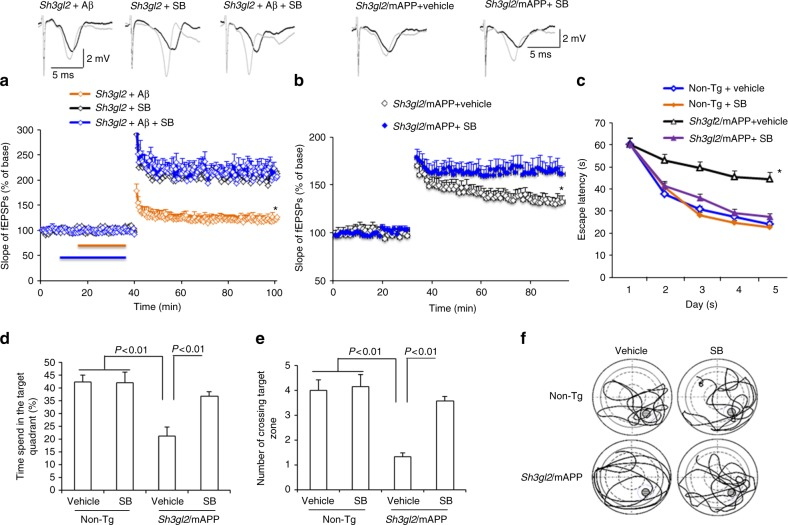 Inhibition of p38 MAP kinase rescues impairment on synaptic plasticity and spatial learning and memory in Tg Sh3gl2 /mAPP mice. a , b Hippocampal slices from 5-month-old to 6-month-old Tg Sh3gl2 mice were pretreated with SB203580 (SB, 1 µM) for 5 min before Aβ perfusion (100 nM for 20 min) and then hippocampal CA3-CA1 LTP was recorded ( a ). Tg Sh3gl2 /mAPP mice were intraperitoneally injected with SB203580 (0.5 mg/kg) once a day for 3 weeks and then performed LTP experiments ( b ) and Morris water maze test ( c – f ) at the age of 5–5.5 months. Upper panels of a and b show representative traces of fEPSP in the indicated slices with the indicated treatment before θ-burst stimulation (black line) after 1 h (gray line). Administration of SB203850 significantly ameliorated hippocampal LTP deficit in Tg Sh3gl2 /mAPP mice compared to the vehicle-treated group. Error bars represent s.e.m., n = 7–10 per group. * p