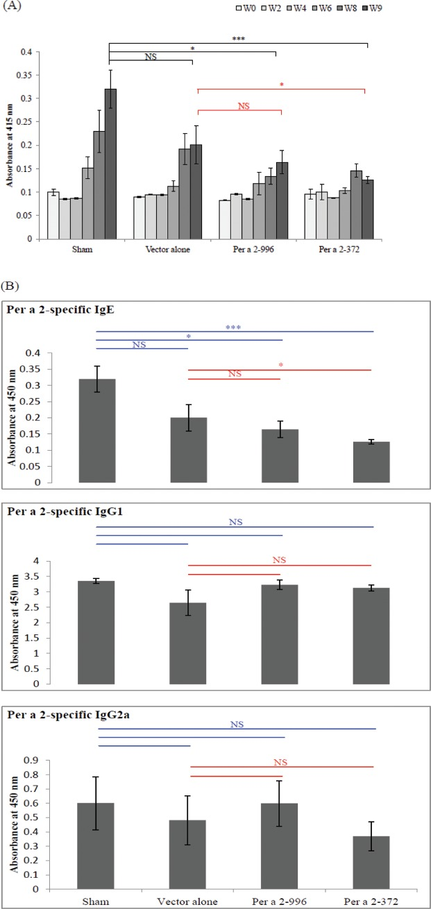 Specific antibody levels in Per a 2 sensitized mice. (A) Per a 2-specific <t>IgE</t> antibodies in the sera at the indicated weeks. (B) Serum levels of Per a 2-specific IgE, IgG 1 and IgG2a among groups at week 9 determined by <t>ELISA.</t> Results are mean±SEM of 5–6 mice from each group. *p